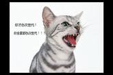次世代网游最牛X之天昏地暗超搞笑萌猫。