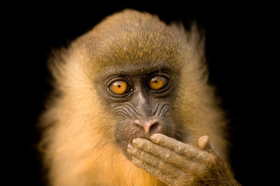 > 图片 >  自然动物 > 正文  关键词:            濒危动物灭绝