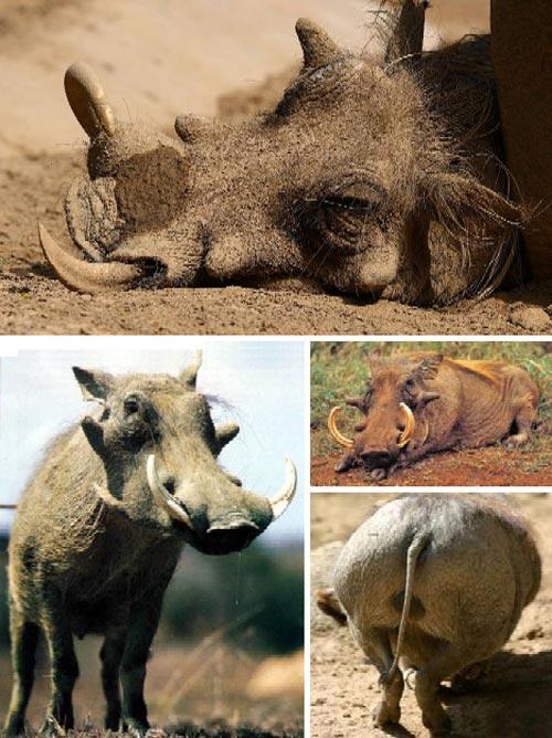 世界上最丑陋的动物[图集]