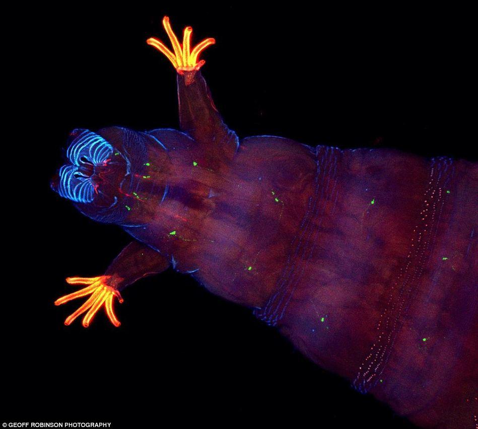 电子显微镜下的动物细胞展示