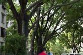 5月29日早上,鹿丹村,一位父亲拉着两个小孩向鹿丹村里驶去。不过,更要命的还在后头。入住之后,小区的住户们便发现,楼板开裂、墙体裂缝等,一到雨天渗水不止。老业主们回忆,在大家的强烈投诉下,1996年,当时的深圳市住宅局开始到小区统计房子损坏的情况。