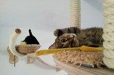 人猫共生空间(实习编辑:石君兰)