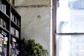 斜倚着书架,像是从墙中长出的枝叶,进而生出了密密的绿叶,陪你一起看书中的天下。(实习编辑 孟璇)