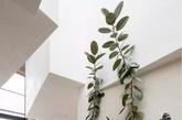 一株绿植就可以装点墙面,而非色彩斑斓的颜料或挂饰。(实习编辑 孟璇)