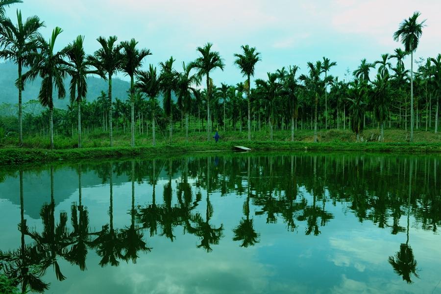茶园槟榔林