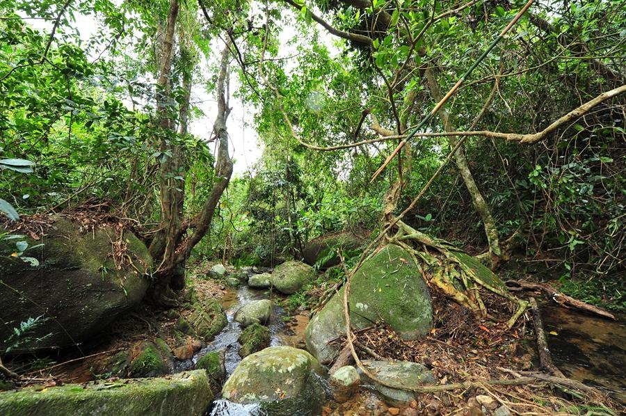 热带雨林错综复杂的根系