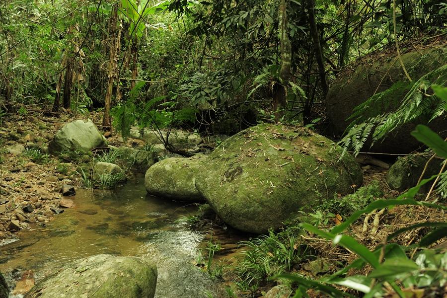 热带原始雨林一景