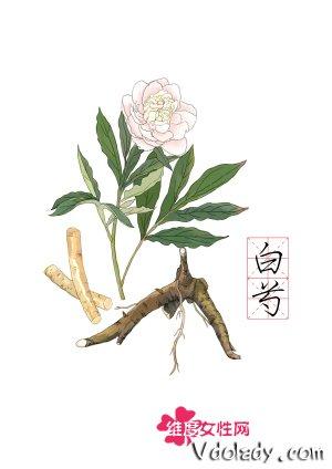 白芍花开歌谱