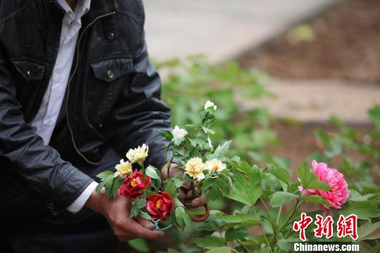 4月27日,面塑爱好者在洛阳国家牡丹院内展示各色面塑牡丹。巩卫东摄