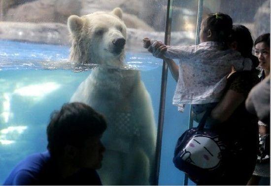 女孩儿:北极熊,你会跳广播体操吗?
