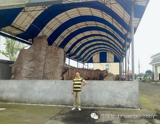 彭州挖天价乌木农民:连北京卖烧饼的都晓得我