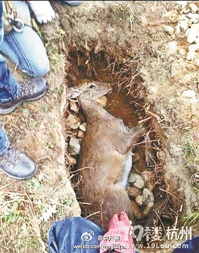 张扬新片杀鹿惹争议 内地尚无任何动物演员保护规定