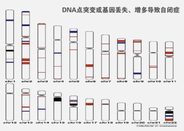 基因测序能够帮助治疗和预测自闭症吗?