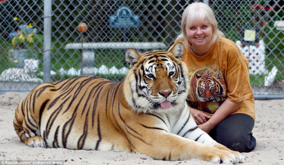 美国女子自家花园中养两只老虎做宠物