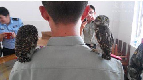看什么看,没看到鸟当警察的吗?