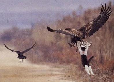 我也要飞!