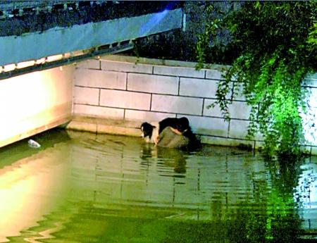 男子为救坠河爱犬 站水中托举2小时