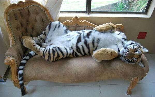 沙发真舒服啊,喵~