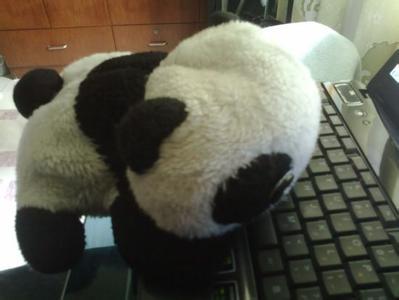 在网上买了一只萌萌哒宠物猪,5个月后,却发现……[fun