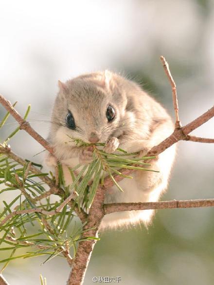 萌宠老鼠图片大全可爱