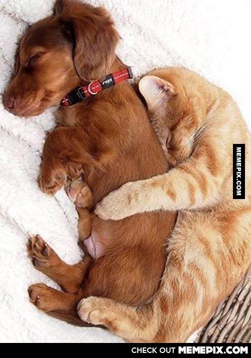 最喜欢这样的睡姿了