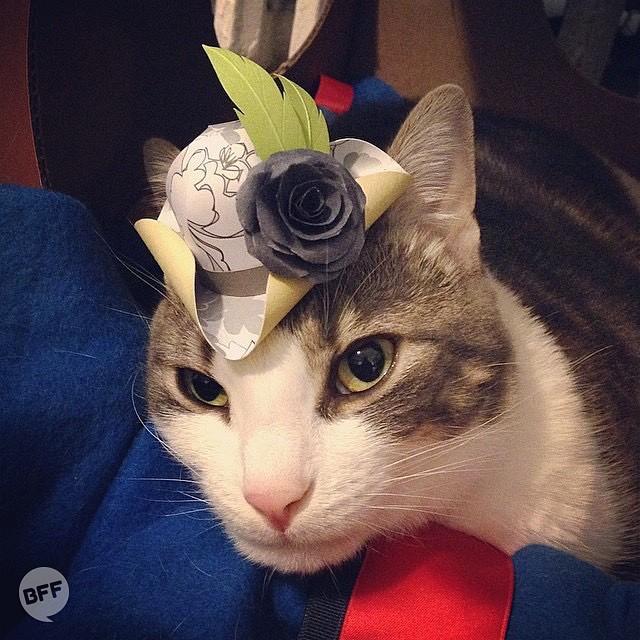 [萌宠]陛下这是今日的萌猫 戴帽子的猫