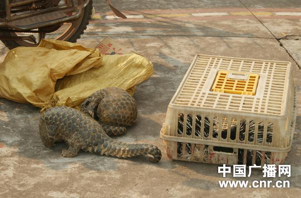 云南普洱边防查获一起野生动物走私案