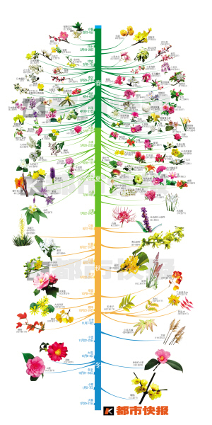 地被植物手绘图例