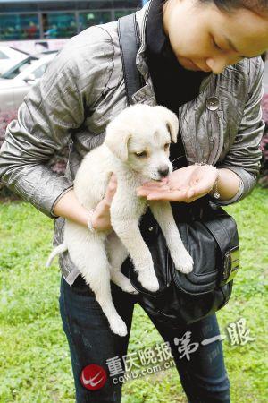 小动物协会呼吁,如果有市民愿意或者有条件可以照顾它们,欢迎大家