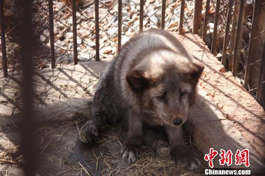 吉林市江南公园动物饲养班张甲生班长告诉记者,经饲养员初步检查