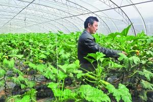 达孜县现代农业产业园成立