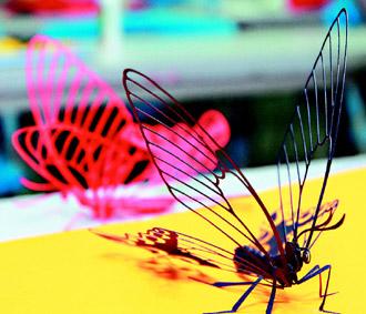 壁纸 昆虫 桌面 330_283
