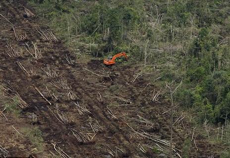 在苏门答腊岛的热带雨林中