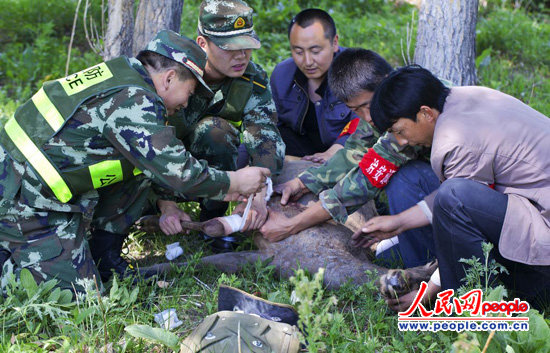 新疆裕民边防大队官兵及时救治国家二级保护动物