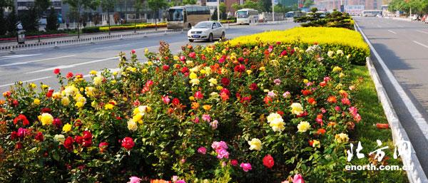 带有鲜花的风景