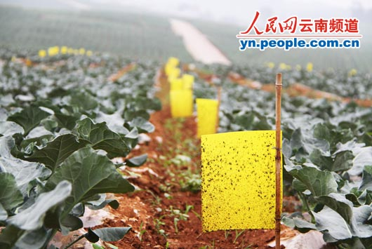德州禹城_禹城扒鸡_禹城农民人均纯收入