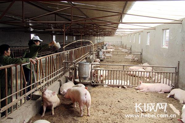 生猪养殖圈舍设计图