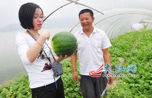 记者向老农请教西瓜种植知识