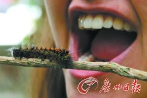 吃腐烂水果 口腔或长蛆虫