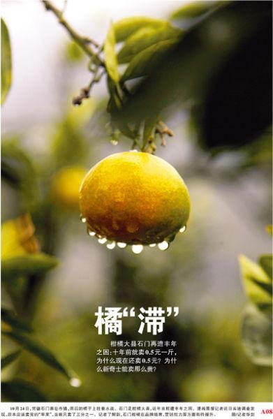 10月24日,常德石门县皂市镇,雨后的橘子上挂着水滴.