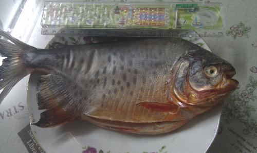 【专家即时播报】申城记者叫卖食土豆?油菜称菜场烧人鱼图片