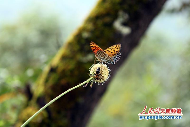 蜜蜂,青蛙相映成趣,沿途风光无限.旅行:李发兴6摄影蝴蝶上不去