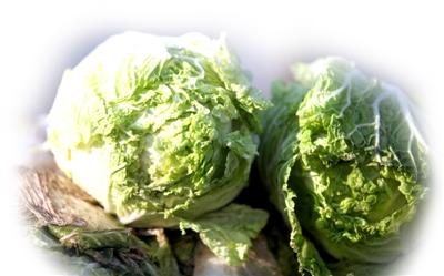 日售1万3千斤白菜