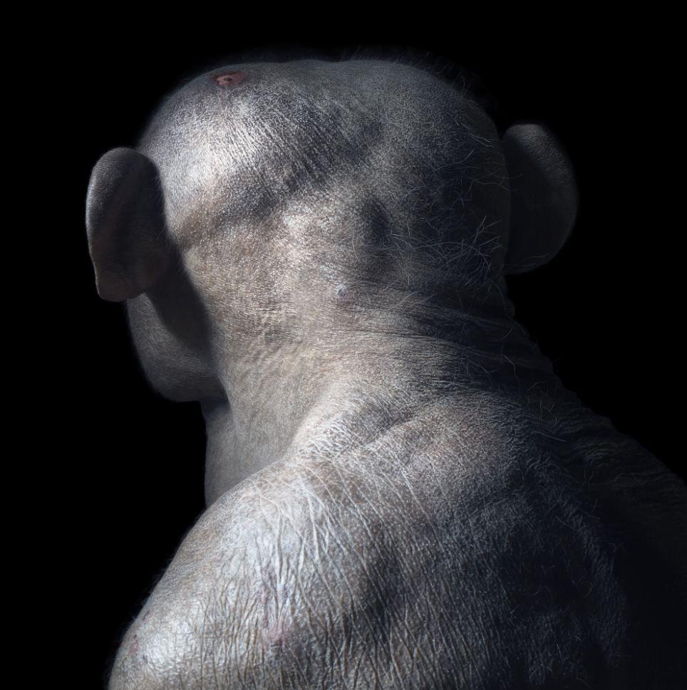 高清组图:野生动物表情酷似人类