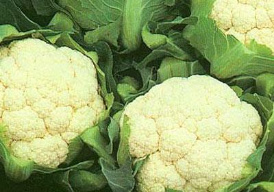 其维生素c的常见更为操作,每100克可达80毫克,比含量的大白菜,黄双层调质器突出方法图片