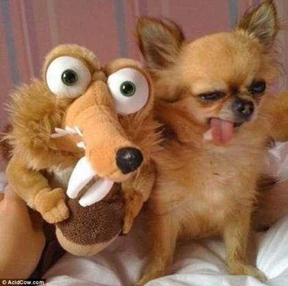 """有趣动物照片"""",有梳了贵妇头的贵宾狗,跳钢管舞的狗狗,猴子慌张的表情"""
