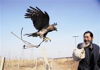 汉沽古稀鹰把式张喜山:驯鹰让它重返蓝天情趣内衣穿我乖看给图片