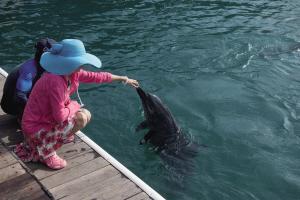 游客喂养海豚