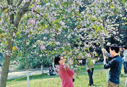 上周末,华南农业大学举行紫荆校园开放日,吸引了众多学生和市民前图片