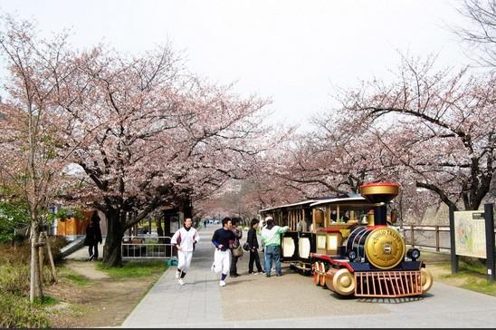 大阪城公园人气赏樱地